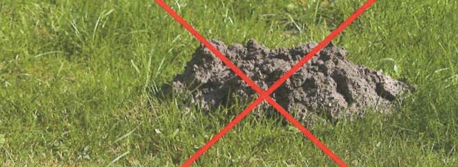 Maulwurfbekämpfung maulwurfbekämpfung dauerhaft mit system